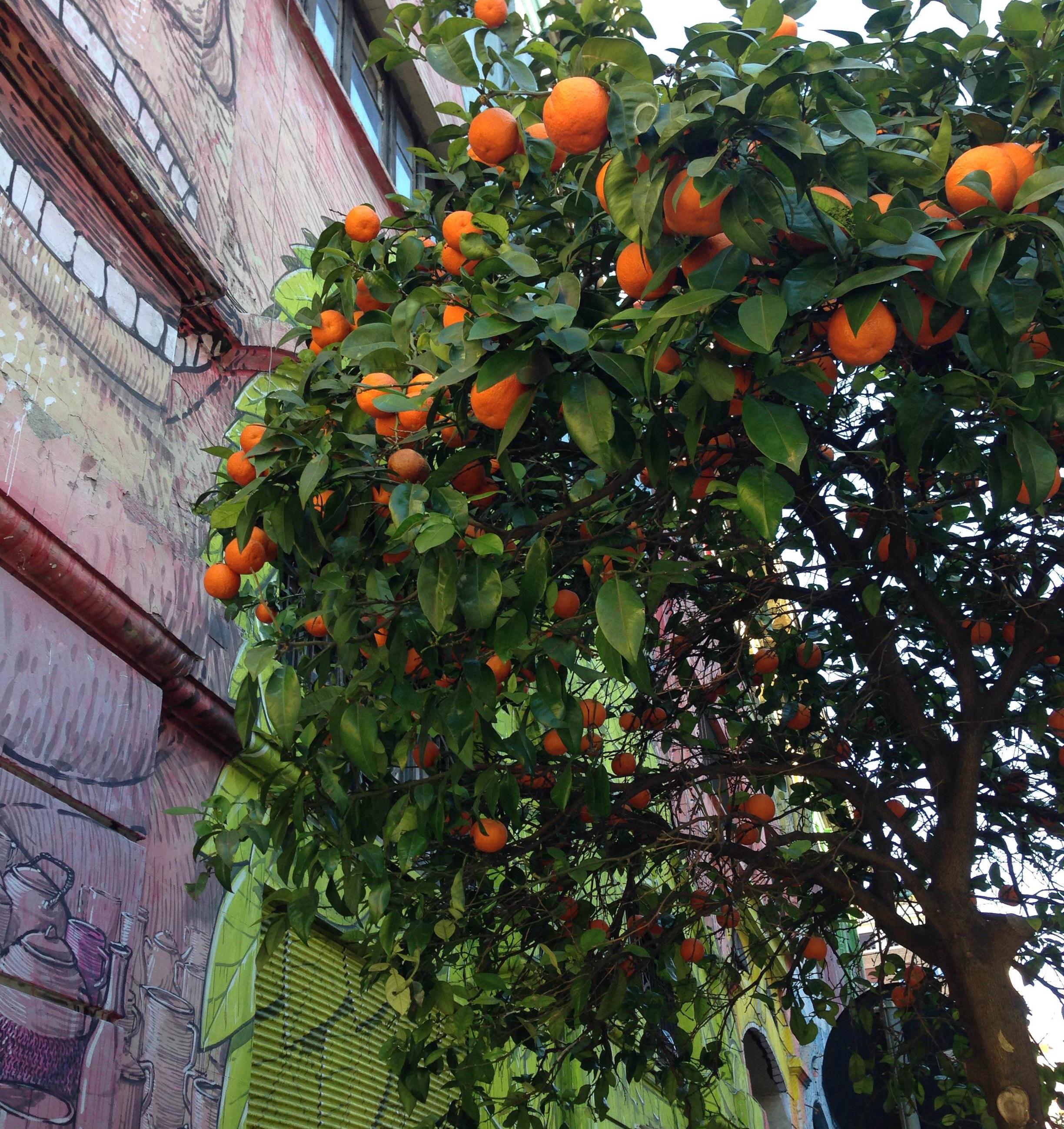 graffitt&oranges